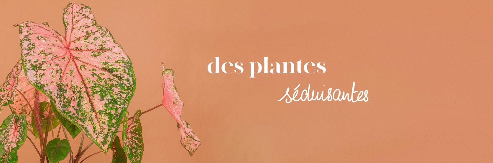 plant ands stories
