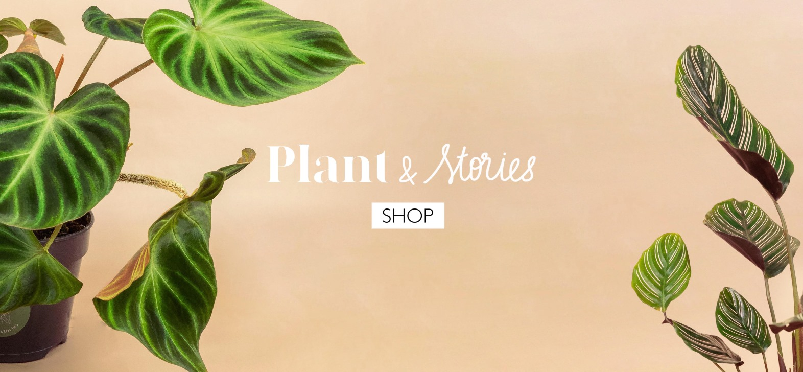 Accueil Plant and Stories